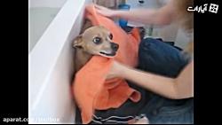 سگ هایی که دوست ندارند حمام کنند