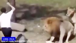 حمله حیوانات وحشی به ان...