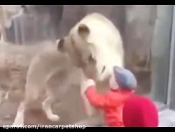حمله حیوانات باغ وحش به...