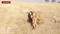 دنیای حیوانات - لحظات ح...