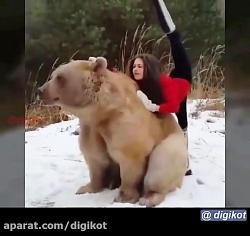 دوستی خرس با یک دختر