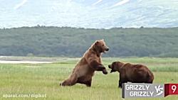 10 نبرد دیدنی بین حیوانا...