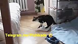 خنده دار ترین ویدیو حیو...