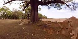 ویدئوی 360 درجه مستند زی...
