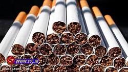 سیگار، بازیگر نقش اول ف...