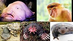 پنج تا از زشت ترین حیوا...