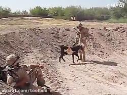 بز گیر داده به سرباز آمریکایی در افغانستان ولشم نمیکنه