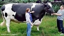 بزرگترین حیوانات جهان