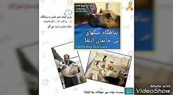پناهگاه حیوانات شیراز