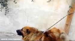 ترس سگ وحشی از مار کبری