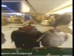 خریدن هواپیما توسط یک اماراتی برای انتقال 80 شاهین خود