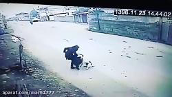 حمله سگ ولگرد به دختر املشی در راه مدرسه