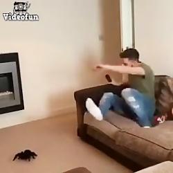 ترساندن پسر توسط دوستش _پسر از عنکبوت میترسه