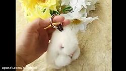 خرگوش یواشکی که با موی واقعی درست شده