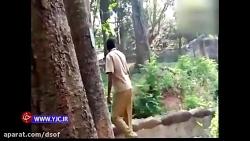 اقدام جنون آمیز مرد جوان در باغ وحش!