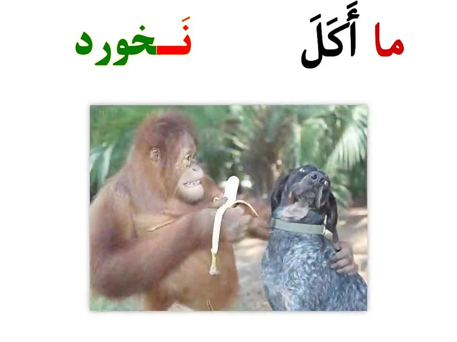 فعل-ماضی-منفی-در-زبان-عربی