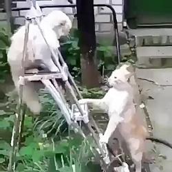 گربه مبارز خخخخخخ