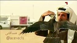 مسابقه شاهین و کبوتر
