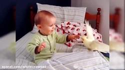 دوستی پرندگان با کودکا...