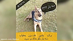 تیدا باهوش ترین سگ ایران
