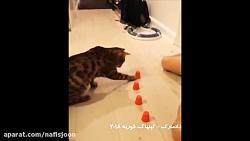 گربه باهوش حواس جمع!