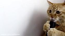 گربه بامزه و دوست داشتنی