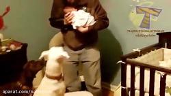 هم بازی بامزه سگ ها و کودکان