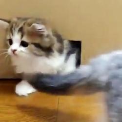 گربه های گوگولی ازتوجع...