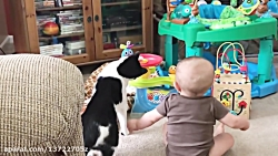 Babies and Cat are Best Friend | Babies and Cats Playing Together #2