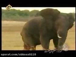 شگفتیهای حیوانات - شعور...
