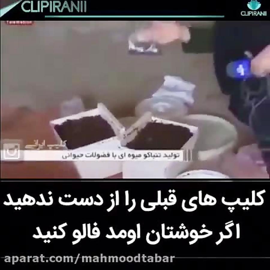 ع گوه فیلم: قلیون با طعم گوه / ویدیو کلیپ | مگیفا