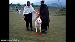 حمله سگ ها به انسان و حی...