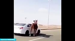 مهار اسب فراری با خودرو...