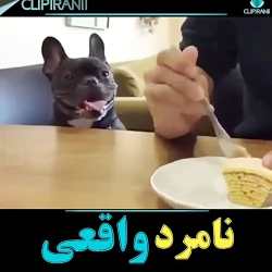 سگ بیچاره_انسانیت داشته باشیم