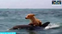کمک دلفین به سگ گرفتار ...