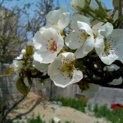 منظره ای از حیاطمون درفصل بهار یه هویی