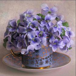شاخه گلی از گلستان مولای متقیان امام علی علیه السلام... ♥تقدیم به وجود نازنینتان♥
