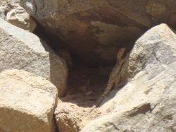 همون طور که گفتم کوهستان را بیشتر از جنگل دوست دارم و زیاد کوه میرم اینم عکس یه مارمولک خوشگل روی یه تخته سنگ