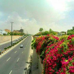 زیباسازی شهر زنجان با گلهای نسترن