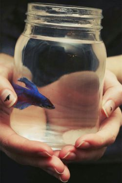 خـدا اینجاسـت ... کنارمـن، مثل ماهی خدای مـن، درون سینه تنگم، تـو را دارم خدای من، تویی اینجا خدای من ... کنارلحظه های من، شبت آرام خدای من ...