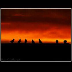 باعشق اگرهمسفری.بسم الله گراهل دعای سحری.بسم الله امشب شب قدراست وخدامنتظراست ازدست گنه اگرخون جگری.بسم الله امشب شب تقسیم حج وکرببلاست گر دلتنگ برای سفری.بسم الله گر اهل ولایتی و خواهان نجف، گرمشتاق جمال حیدری.بسم الله درمحضر ارباب محبت،مهدی خواهی بزنی بال و پری.بسم الله التماس دعاا