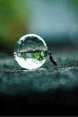 نسیم نفس خداست....و هیچ کس نمی دانست که در گوشه ای از خاک، مورچه ای با خدا گرم گفتگوست ...(کامنت رو از دست ندین)
