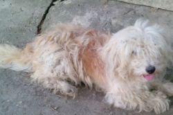 این سگ پسر خاله منه خدا رحمتش کنه سگه هنوز با صدای موتور میره سمت در