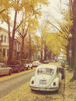 روزهایم  همچون برگ های پاییز  غروب که می شود می افتد …  نمی دانم درخت زندگیم چند برگ دارد…؟!  فقط می دانم پاییز است…!