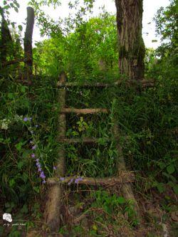 نردبانی تا باغ خدا