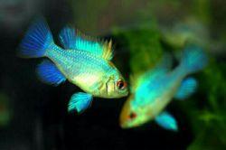 خدایا یا نوری بیفکن یا توری  ماهی کوچکت از تاریکی میترسد...