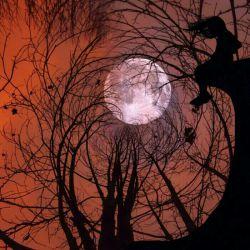 """ماه به دور زمین میچرخد، زمین به دور خورشید،حتی در آسمان هم همیشه """"عشق"""" سهم دیگریست...شب همه ی دوستان گلم بخیر"""
