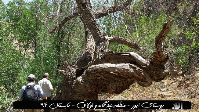 منطقه عیدگاه - روستای ایور -  استان خراسان رضوی - تیر 94