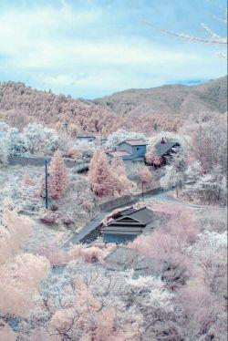 شکوفه های زیبا  ژاپن