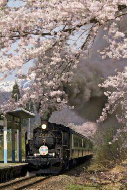 قطار شکوفه ها